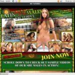 Latin-shemales.net Membership Account