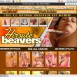 Hirsutebeavers.com Paswords